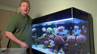 My Favourite REEF Aquarium REDSEA max 250