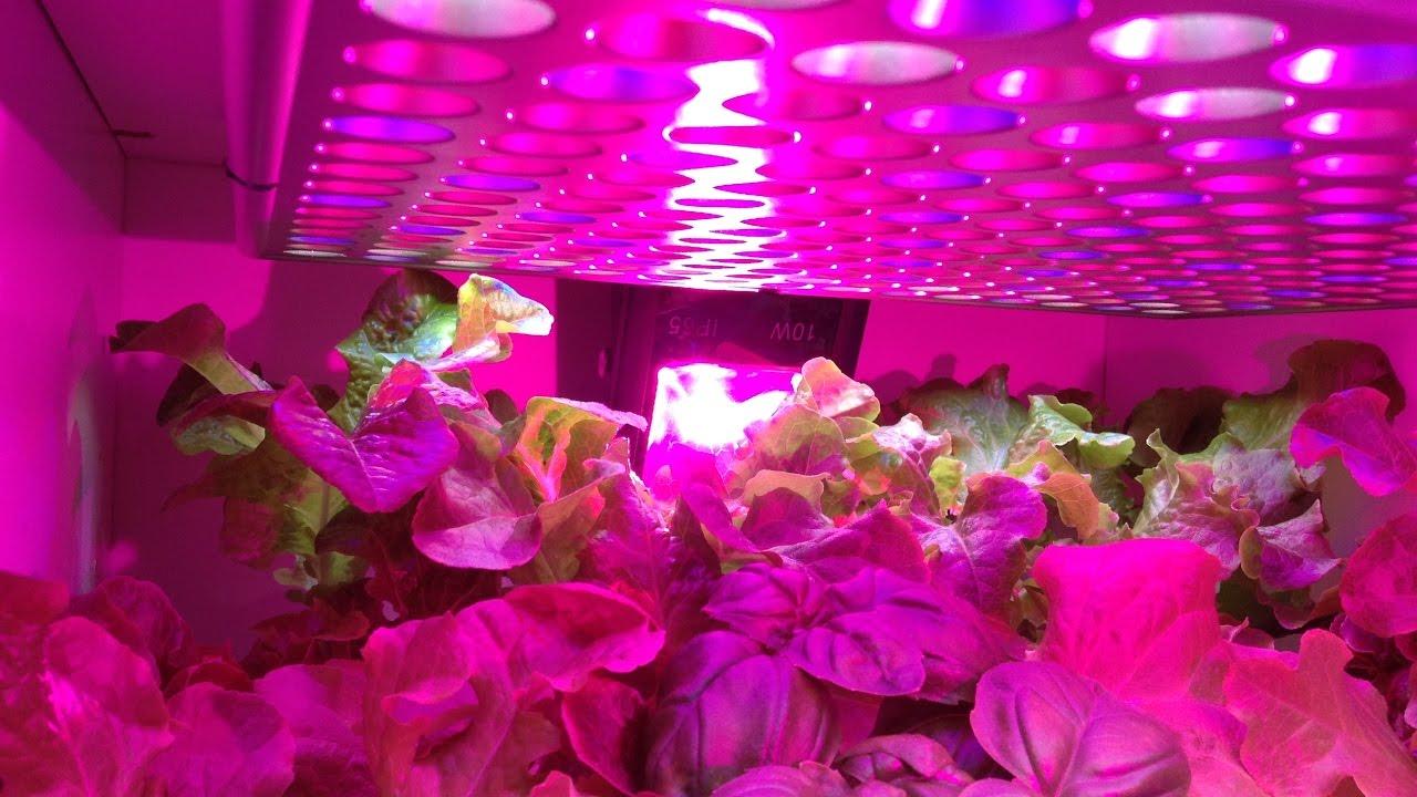 2 nvx projecteur led chip 10w culture indoor plante hydroponique 34w pour 1 2 m est ce. Black Bedroom Furniture Sets. Home Design Ideas