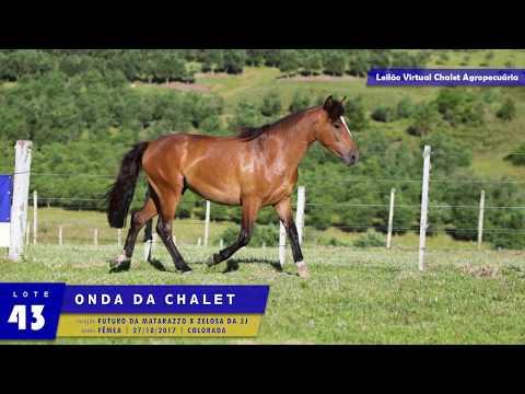 LOTE 43 - Onda da Chalet