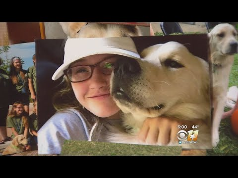 Renee - Quinlan, Texas: Teens Service Dog Shot To Death #JusticeForJourney