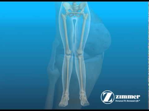 Knee Anatomy Knee Joint Anatomy Human Anatomy Animation Youtube