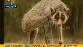 Seshachalam Forest | TTD Focus on Animals Safety and security