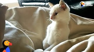 Kitten Born With Twisted Legs Is The Spunkiest Of His Siblings - CHURRO | The Dodo