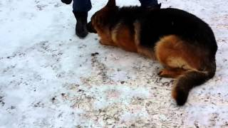 Собака Конь 1