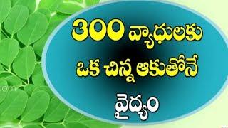 300 వ్యాధులకు మెడిసిన్ మునగాకు   Drumstick Leaves Health Benefits I Munagaku    Telugu Health Tips
