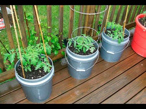 Como sembrar tomates cherry en macetas youtube - Tomates cherry en maceta ...