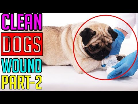 How To Clean Your Dog's Wound || Part-2 || Dog Facts