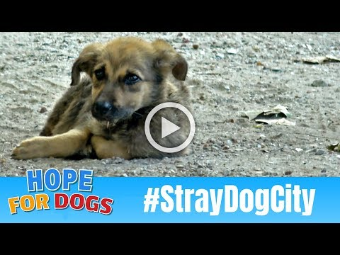 Hope For Starving Street Puppies In Houston #StrayDogCity When Dog Rescuers March