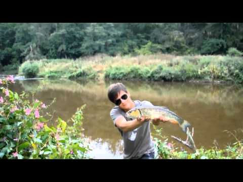 Chubs and perch in the Nahe river -  Topwater - Germany