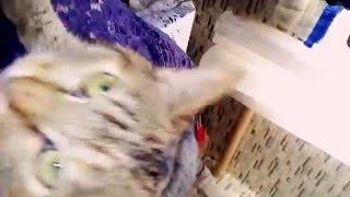 Кошка лунтик