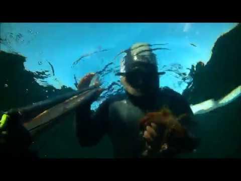 Come si pesca il polpo 39 tecnica infallibile 39 doovi for Cucinare murena