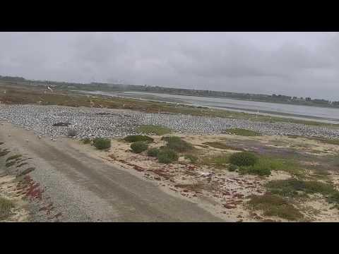 Bolsa Chica Land Trust Live Stream