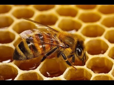 Scientists Discover why Honey is the Best Natural Antibiotic!