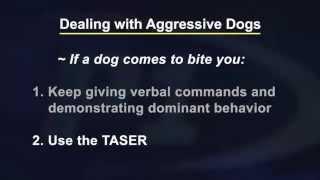 Reality Training  Dealing With Aggressive Dogs