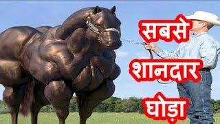 10  सबसे शानदार घोड़ो की नस्ल | Top 10 Expensive Horse Breeds ( hindi )