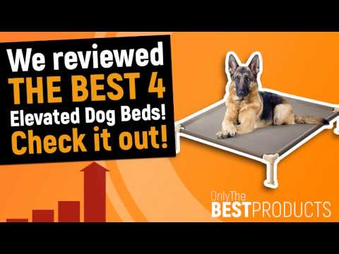 Best Elevated Dog Bed - The Best 4 Elevated Beds for your Dog