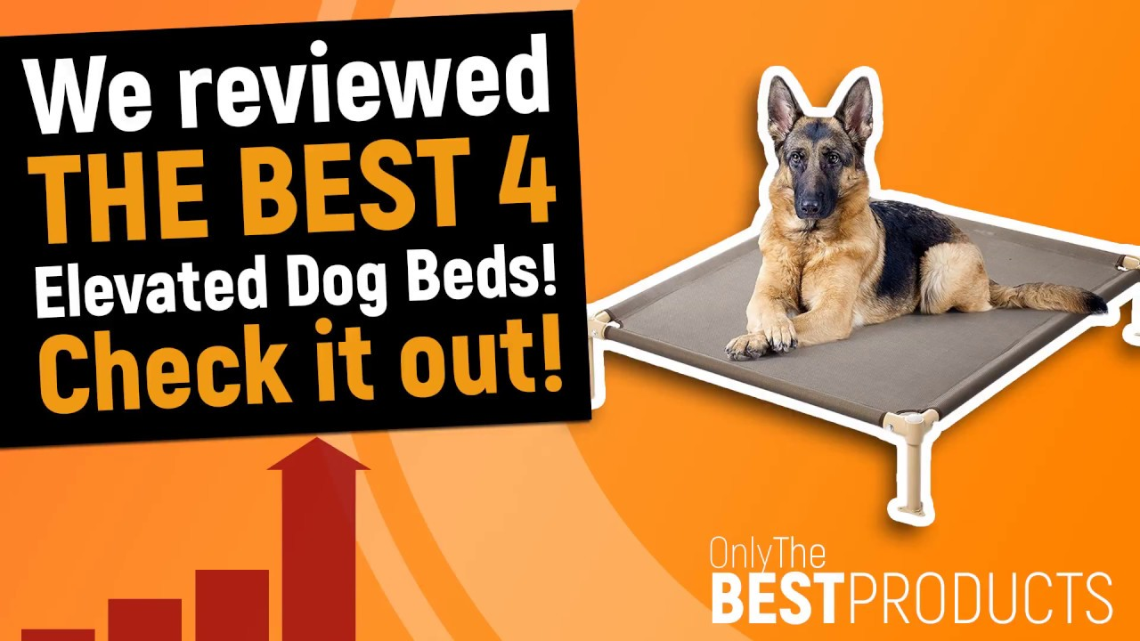best elevated dog bed the best 4 elevated beds for your dog - Elevated Dog Beds