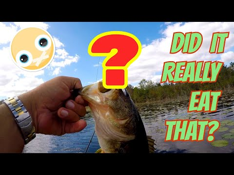 CRAZIEST Lure Fishing Challenge!! Fishing with the STRANGEST Lures I could find!! (Surprising)
