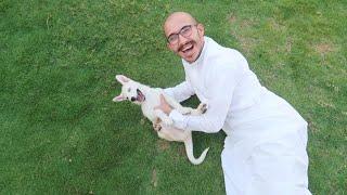 شريت كلب عمرة ٢٠ يوم !😭♥️