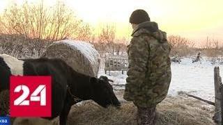 Дело фермера, купившего GPS для коровы, вернули на доследование - Россия 24