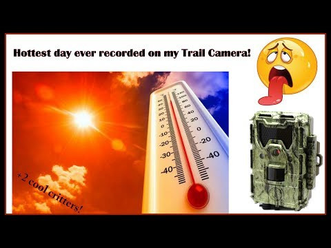 Hottest day Trailcamming yet! (Dalmore 4th Cam)