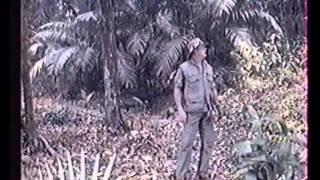 Сериал Тарзан 90е.avi