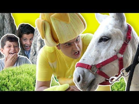 فوزي موزي وتوتي – حمار للبيع – Donkey for sale thumbnail