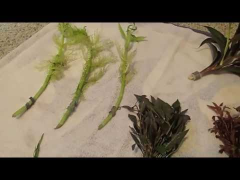 Aquatic Plants From Singapore