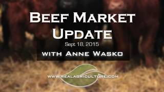 Beef Market Update: Fed Cattle Market Appears Shakey While Feeder Cattle Prices Find Record Highs