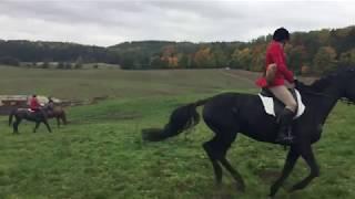 Hubertus 2017 - IV Wielka Gonitwa za lisem - Ulkowy