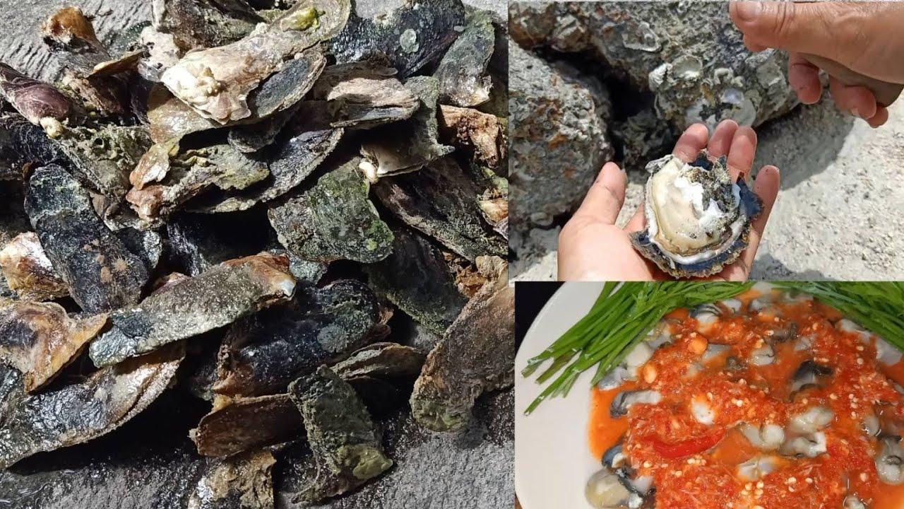 เจาะหอยตาราบ หาหอยกริช ต้มหอยกริช กินกับน้ำจิ้มซีฟู้ด 👍😋23-7-2021
