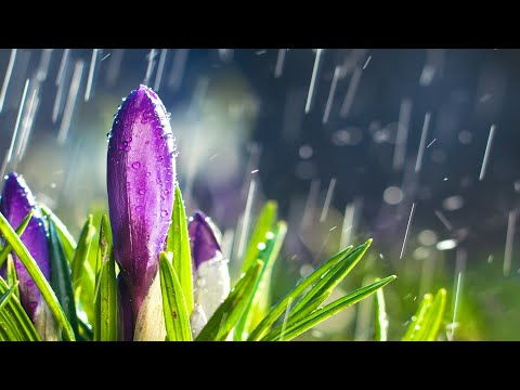 10 Hours of Relaxing Music - Sleep Music with Rain Sound, Piano Music for Stress Relief (Emma)