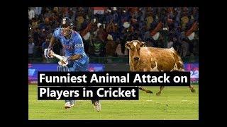 Funny Killing Moments with Animals In Cricket Match 2018  क्रिकेट मैच में पशु के साथ मजेदार क्षण