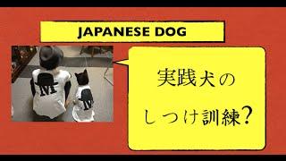 【必見】極秘公開中**犬が簡単に手なずけられるしつけDVD⇒http://bit....
