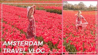 Amsterdam travel vlog   TULIP TOUR IN Holand