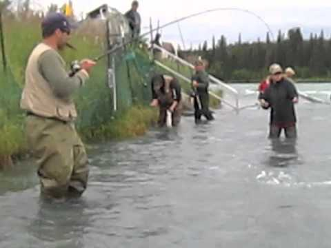Alaska Sockeye Red Salmon Fishing On Kenai River