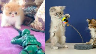 Cat Reaction to playing Toy - Funny Cat Toy Reaction Compilati…