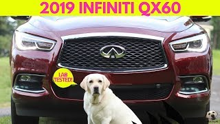 2019 Infiniti QX60: Andie the Lab Review! #Infiniti #AndietheLab #Dogs