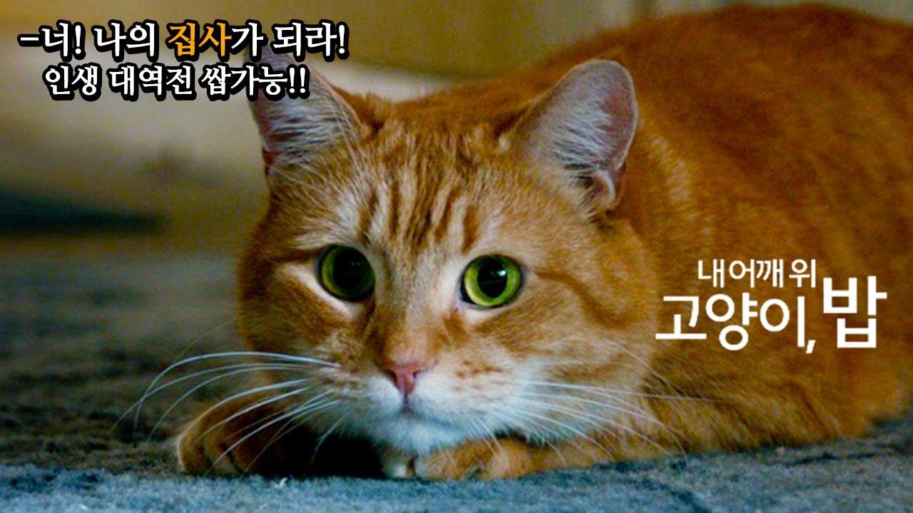 [심쿵 주의] '나만 고양이 없어!' _ 우리가 길냥이를 키워야 하는 이유(?) _ 감동 실화 '내 어깨 위 고양이, 밥'