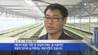 [경기] 에너지 절감형 수경재배기술 개발 / YTN