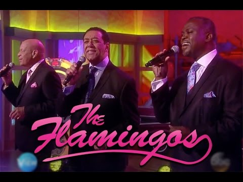 The Flamingos On The View