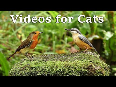 Videos for Cats to Watch – Birds and Bird Sounds in October