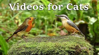 Videos for Cats to Watch - Birds and Bird Sounds in October