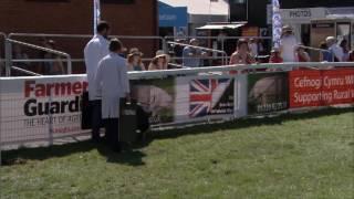 Moch Berkshire | Berkshire Pigs