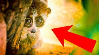 10 Cute Animals That Can Actually Kill You thumbnail