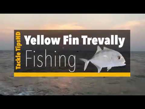 Yellow fin trevally fishing |Vatta para fishing by tackle tips