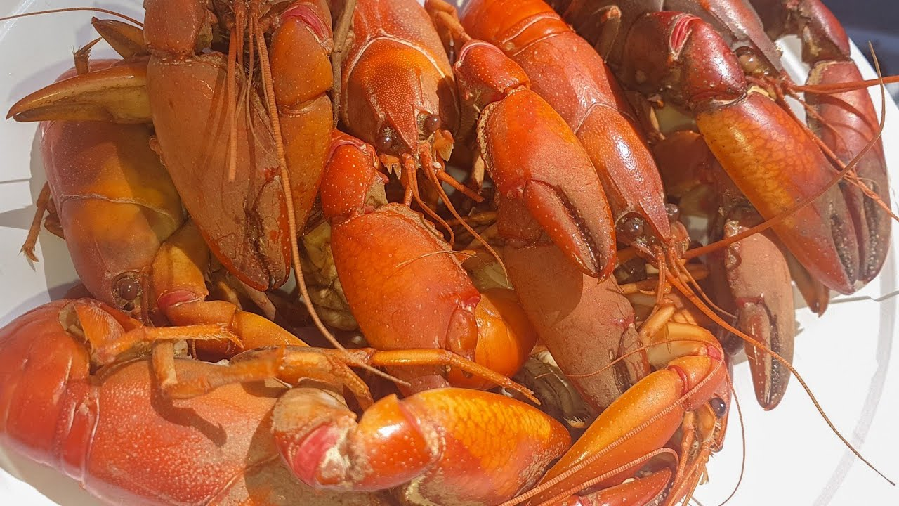 Yabby Catch And Cook Youtube
