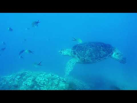 Madaplouf Diving Diving Nosy Be: a magic turtle!