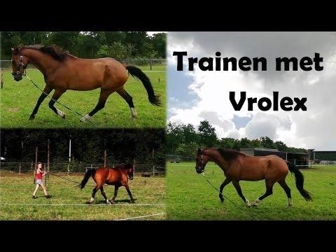 Vlog 21# Weekvlog   Vrolex TRAINEN, paradressuurwedstrijd, ROTSTRAAL!   Horse Around