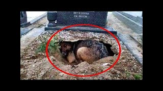 They thought this dog was mourning its owner until they saw what she was hiding...